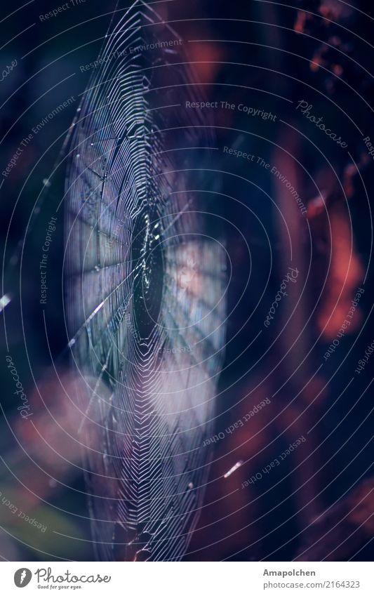 ::18-11:: Umwelt Natur Frühling Sommer Herbst Klima Garten Park Wiese Wald Spinne Traurigkeit Sorge Trauer Tod Enttäuschung Einsamkeit Angst gefährlich Stress
