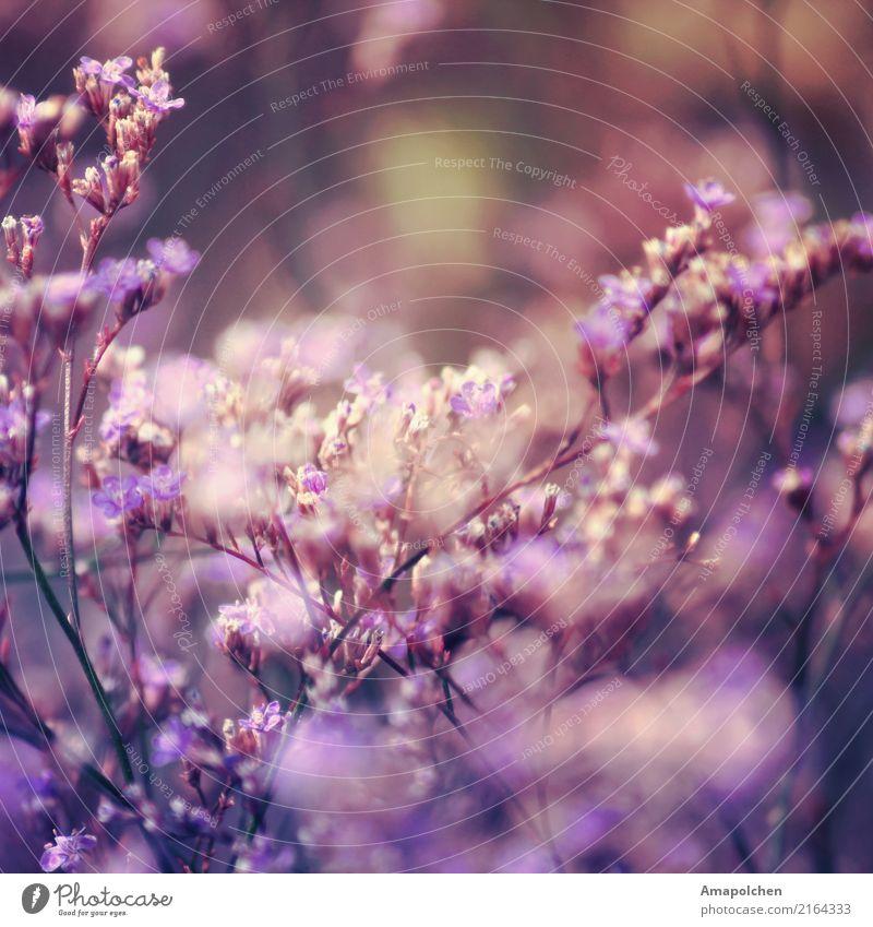 ::18-15:: Wellness Leben harmonisch Wohlgefühl Zufriedenheit Sinnesorgane Erholung ruhig Hochzeit Trauerfeier Beerdigung Taufe Umwelt Natur Landschaft Pflanze