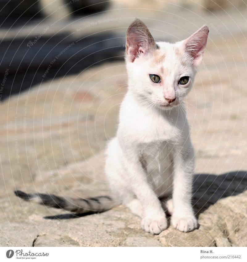 Trauriges Kätzchen Tier Haustier Katze 1 Tierjunges sitzen klein niedlich rosa weiß Gefühle Tierliebe Traurigkeit Sorge Schmerz Trauer Gedeckte Farben