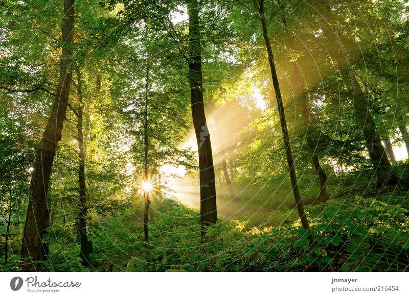Lichtdurchfluteter Wald Ferien & Urlaub & Reisen Umwelt Natur Landschaft Pflanze Sonne Sonnenaufgang Sonnenuntergang Sonnenlicht Schönes Wetter Baum Blatt