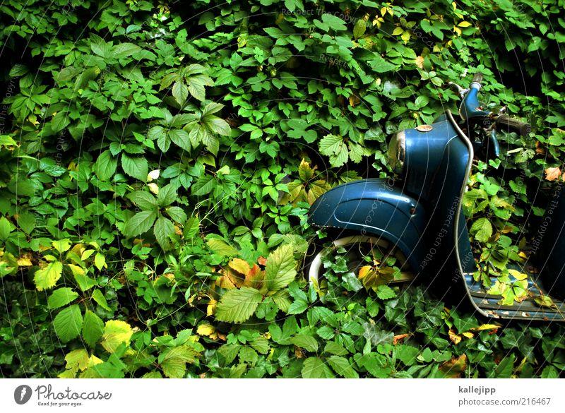fahrt ins grüne Natur Pflanze Blatt Wald Garten Zeit warten Verkehr Wachstum Lifestyle retro Romantik Urwald ökologisch Kleinmotorrad Klimawandel