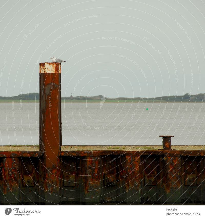 Pfahlsitzer Himmel Natur Wasser alt blau rot Schwimmen & Baden Hafen Nordsee Rost Verkehrswege Schifffahrt Möwe schlechtes Wetter Meer
