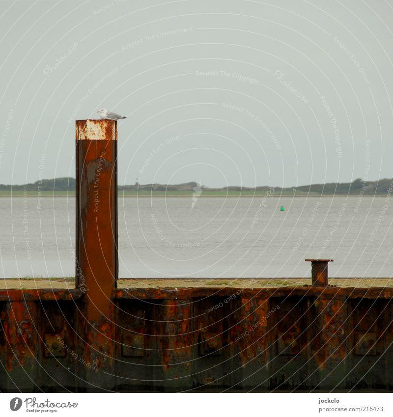 Pfahlsitzer Natur Wasser Himmel schlechtes Wetter Nordsee Verkehrswege Schifffahrt Hafen Schwimmen & Baden blau rot Menschenleer Möwe alt Rost Farbfoto