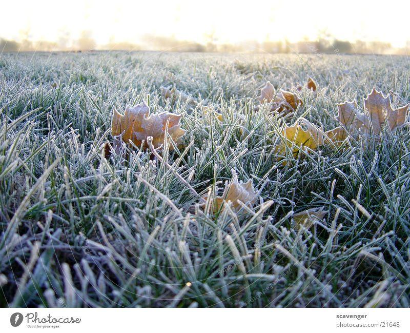 Morgentau Winter Wiese Jahreszeiten kalt weiß Horizont Menschenleer Pflanze Gras Seil Raureif Landschaft Schnee Eis Sonne Natur Außenaufnahme