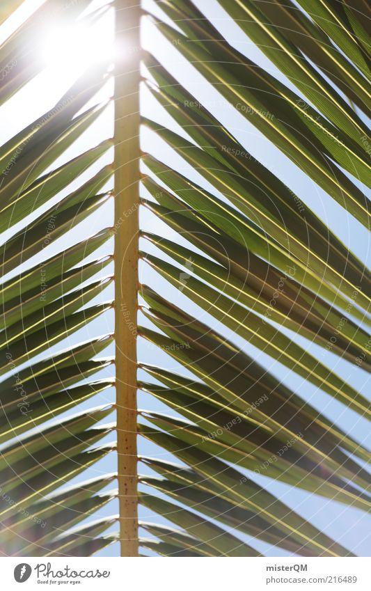 weit weg. Natur Sommer Ferien & Urlaub & Reisen ruhig Wetter Umwelt ästhetisch Palme Schönes Wetter grell mediterran Kleine Antillen Baum Gegenlicht abstrakt