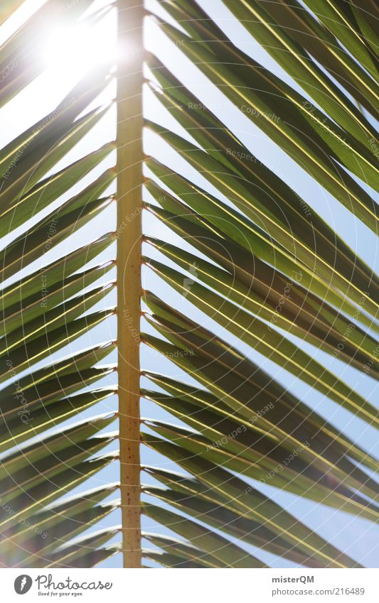 weit weg. Natur Sommer Ferien & Urlaub & Reisen ruhig Wetter Umwelt ästhetisch Palme Schönes Wetter grell mediterran Kleine Antillen Baum Gegenlicht abstrakt Palmenwedel