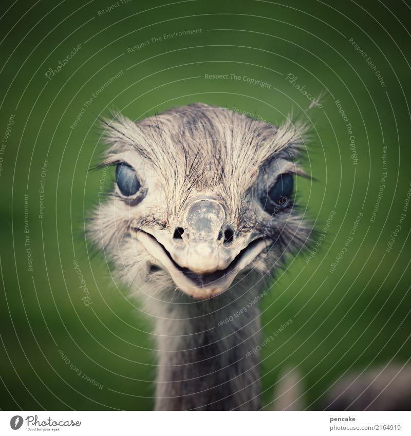 blick durch die nick Wiese 1 Tier Schutz Vogel Strauß Auge nickhaut Schnabel Lächeln Farbfoto Außenaufnahme Schwache Tiefenschärfe Tierporträt Blick