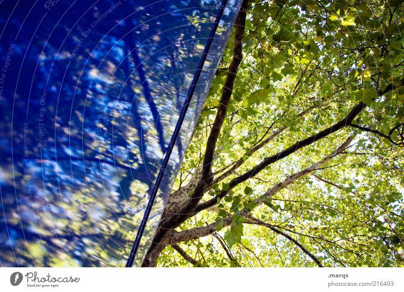 Hoffnung Natur Pflanze Sommer Herbst Baum Mauer Wand Zeichen Wachstum außergewöhnlich schön blau grün Gefühle Ast Blätterdach Farbfoto Außenaufnahme