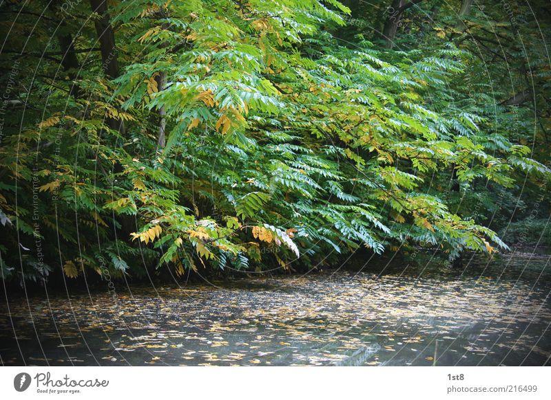 Idyll Natur Wasser Baum grün Pflanze Blatt gelb Wald Herbst See Landschaft Umwelt nass ästhetisch Jahreszeiten Seeufer