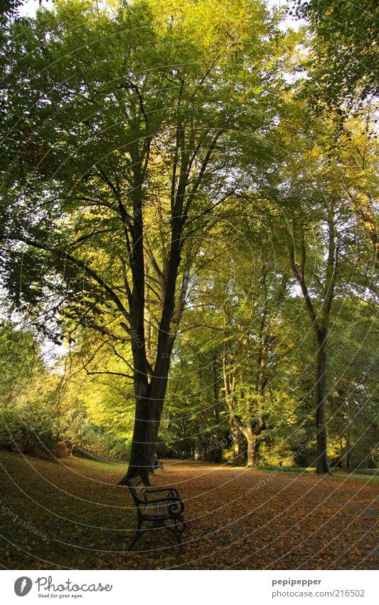 herbstruhe Natur Baum Sonne blau Pflanze Ferien & Urlaub & Reisen Blatt Erholung Herbst Freiheit Holz träumen Wege & Pfade Park Landschaft braun