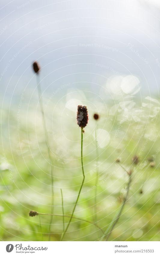 Sommerüberbleibsel Natur schön Pflanze Wiese Herbst Gras hell Gesundheit glänzend Sträucher Schönes Wetter Lichtspiel herbstlich Pollen verblüht
