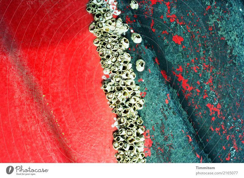 Farben und Formen. grün rot Wachstum Schifffahrt Nordsee abblättern Schaden Dänemark Fischerboot Naturwuchs Bordwand