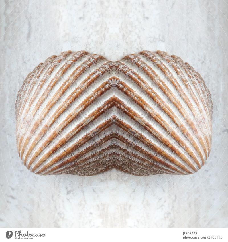 doppelgänger | feel me Muschel ästhetisch Zufriedenheit Design Erfahrung Kontakt Symmetrie träumen Meer Muschelschale verschmelzen Reflexion & Spiegelung