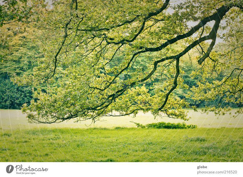 Schwarzer Blitz - Grüner Himmel Natur Baum Park Wiese Wald ästhetisch grün Farbfoto Außenaufnahme Menschenleer Tag Kontrast Zweige u. Äste Textfreiraum unten