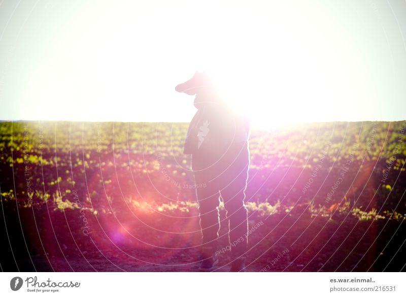 headshot. Mensch Wiese Wärme Horizont verrückt stehen leuchten Schönes Wetter anonym Blauer Himmel kopflos unerkannt androgyn Wegrand Feldrand