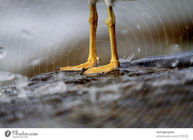 Feuchtgebiete Wasser Tier kalt Regen Wetter Zufriedenheit Vogel nass Wassertropfen frisch Möwe Pfote spritzen Niederschlag Wasserspritzer Tierfuß