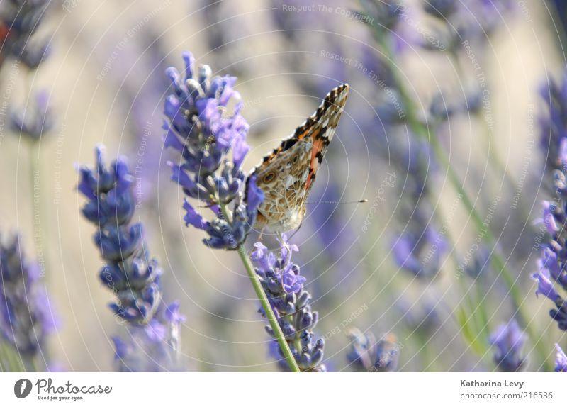 Flieder Natur grün schön Sommer Pflanze Blume Tier Leben Frühling Blüte wild sitzen Klima authentisch frei frisch