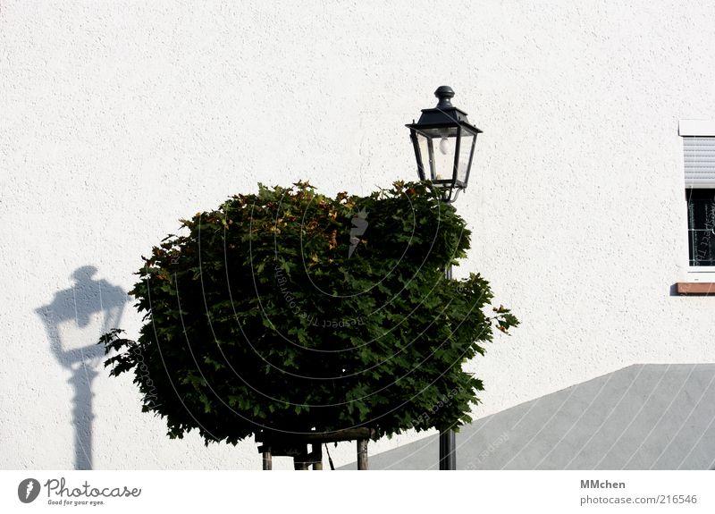 Das Licht und sein Schatten Baum Haus Fassade entdecken ruhig Laterne Baumkrone weiß Fenster Mauer Farbfoto Außenaufnahme Textfreiraum oben Tag Sonnenlicht