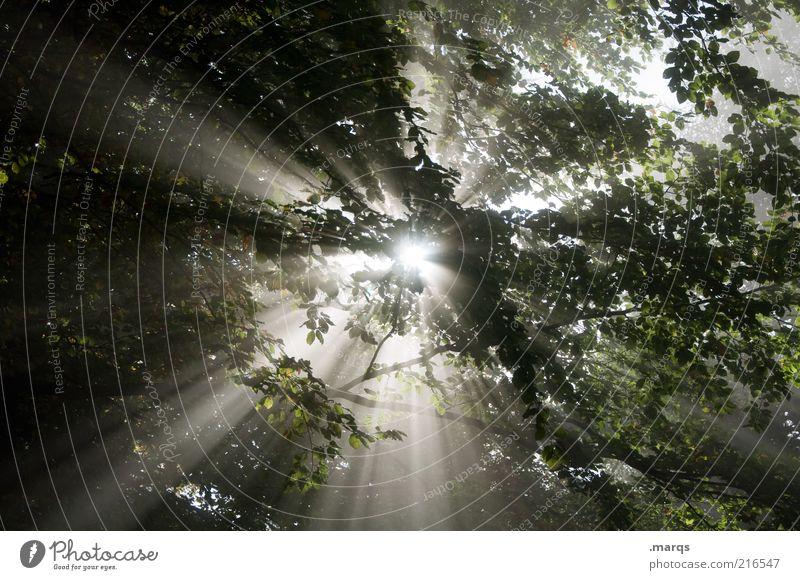 Shine on Natur Urelemente Sonne Nebel Baum Zeichen leuchten frisch Gefühle Lebensfreude Ewigkeit Klima mystisch Märchenwald Farbfoto Außenaufnahme