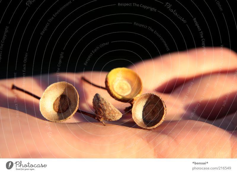 guck mal: herbst! Natur Hand alt schwarz Herbst braun maskulin Frucht Zeit rund Wandel & Veränderung fallen natürlich berühren festhalten entdecken