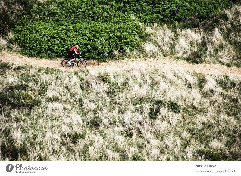 Mountainbike Ferien & Urlaub & Reisen Fahrradtour Mann Erwachsene Menschenleer Gesundheit Freude Gras Landschaft Freizeit & Hobby Fahrradfahren Mountainbiking