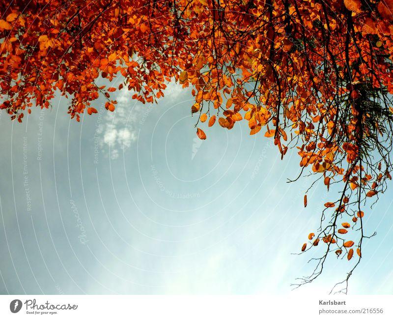 herbsthängen. harmonisch Umwelt Natur Himmel Herbst Schönes Wetter Baum Blatt Wald Wandel & Veränderung Herbstlaub herbstlich Strukturen & Formen hängend Ast