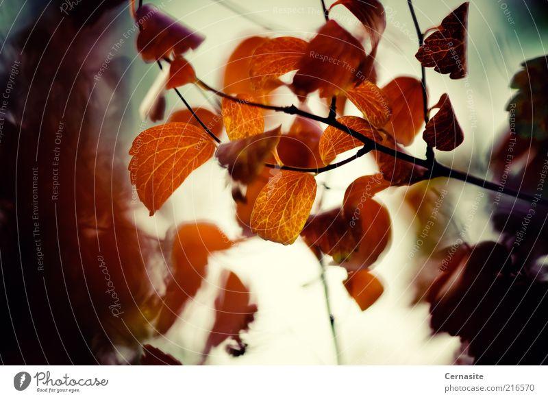 Ein Moment der Depression Umwelt Natur Pflanze Feuer Sonnenlicht Herbst Baum Blatt ästhetisch bedrohlich gruselig natürlich trocken braun gelb gold Gefühle