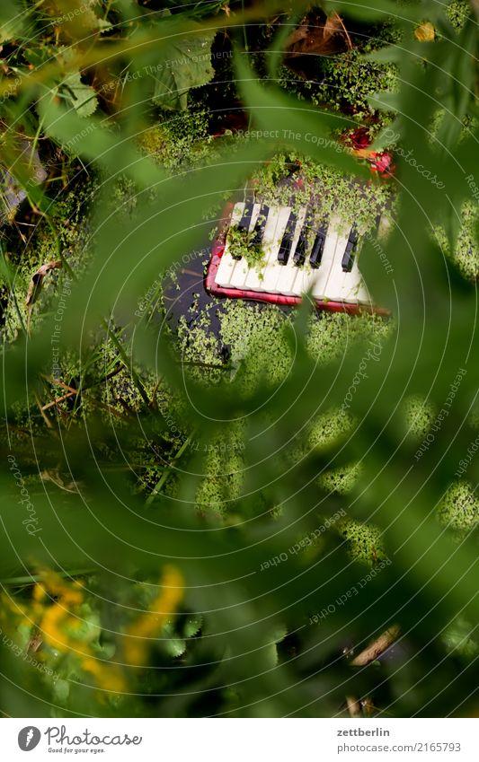 Ein Klavier, ein Klavier! Klaviatur Musik Akkordeon Teich Fluss Sumpf untergehen Müll Umweltverschmutzung wegwerfen Musikinstrument Rätsel seltsam verlieren