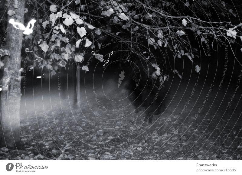 Hell-oh-hell Mensch laufen dunkel gruselig Angst Entsetzen Todesangst unheimlich Nebelschleier Baum Halloween Geister u. Gespenster geisterhaft Hexe