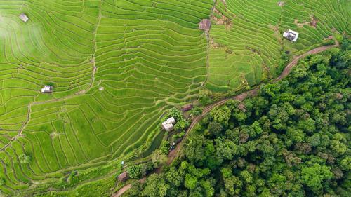 Draufsicht der Reisreisfelder in Nord-Thailand Getreide ruhig Ferien & Urlaub & Reisen Tourismus Ausflug Sommer Berge u. Gebirge Umwelt Natur Landschaft Pflanze