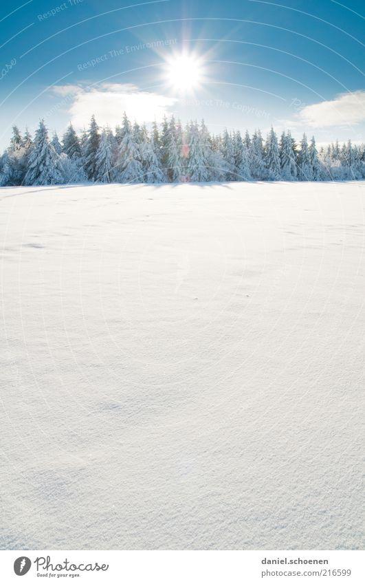 und ?? freut ihr euch ?? Natur schön weiß Baum Sonne blau Winter Ferien & Urlaub & Reisen ruhig Wald kalt Schnee Landschaft hell Umwelt Ausflug
