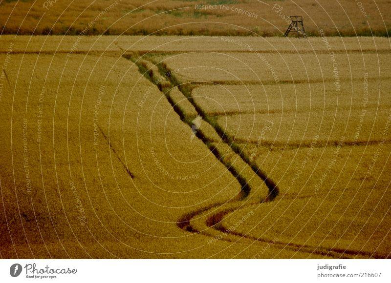 Acker Umwelt Natur Landschaft Pflanze Sommer Nutzpflanze Feld natürlich Stimmung Getreide Getreidefeld Spuren Hochsitz Farbfoto Gedeckte Farben Außenaufnahme