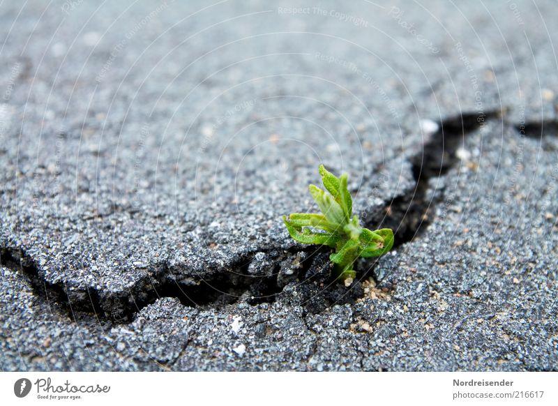 Kraft Leben Umwelt Natur Pflanze Erde Frühling Wildpflanze Verkehr Straße Wege & Pfade atmen Wachstum kaputt nachhaltig natürlich Glaube Entschlossenheit Erfolg