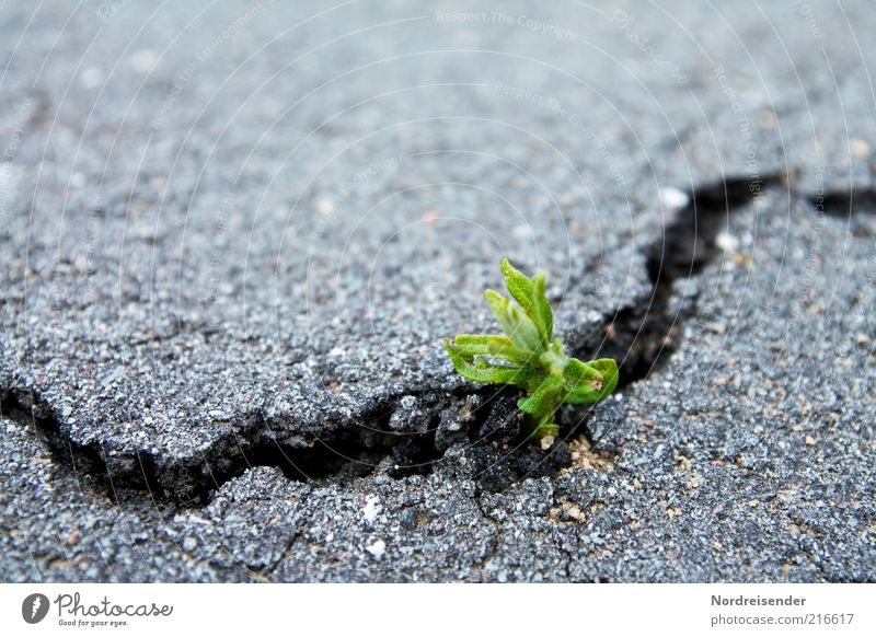 Kraft Natur Pflanze Umwelt Leben Straße Wege & Pfade Frühling natürlich Erde Verkehr Erfolg Wachstum kaputt Hoffnung Asphalt