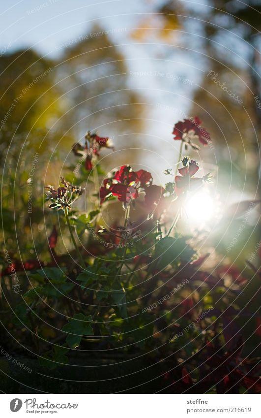 [ZICKENKRIEG] Beinahe ein Tautropfenmakro Natur Baum Sonne Blume Pflanze Herbst Gras Umwelt Romantik Sträucher Kitsch Schönes Wetter
