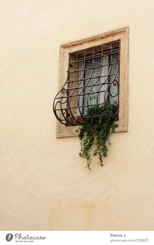 finestra uno Mauer Wand Fenster hell schön gelb grün Romantik eingeschlossen Pflanze Gardine Italien Verona Farbfoto Außenaufnahme Tag Menschenleer Gitter
