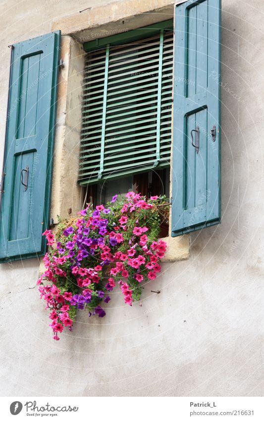 finestra due Fenster Beton Holz Farbe Blume Verona Italien Rollo Romantik Verliebtheit schön Wohlgefühl Farbfoto Außenaufnahme Textfreiraum unten Tag Kontrast