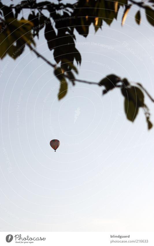 Fly Away fliegen Expedition Himmel Wolkenloser Himmel Baum Blatt Verkehrsmittel Ballone blau schwarz entdecken Freiheit Freizeit & Hobby Freude Farbfoto