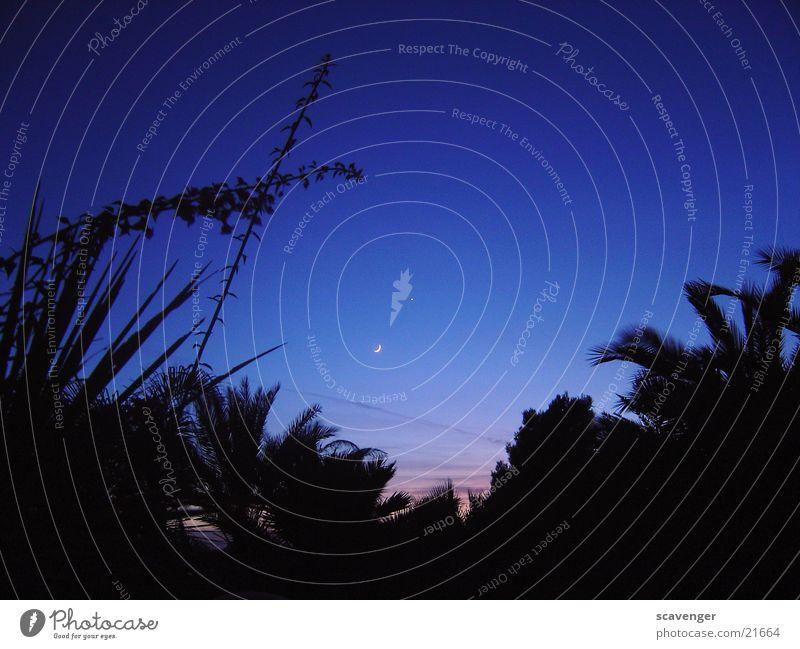 sunset urlaub Sonnenuntergang rot schwarz Palme dunkel schön blau Pflanze Mond Lampe hell Licht Schatten Stern