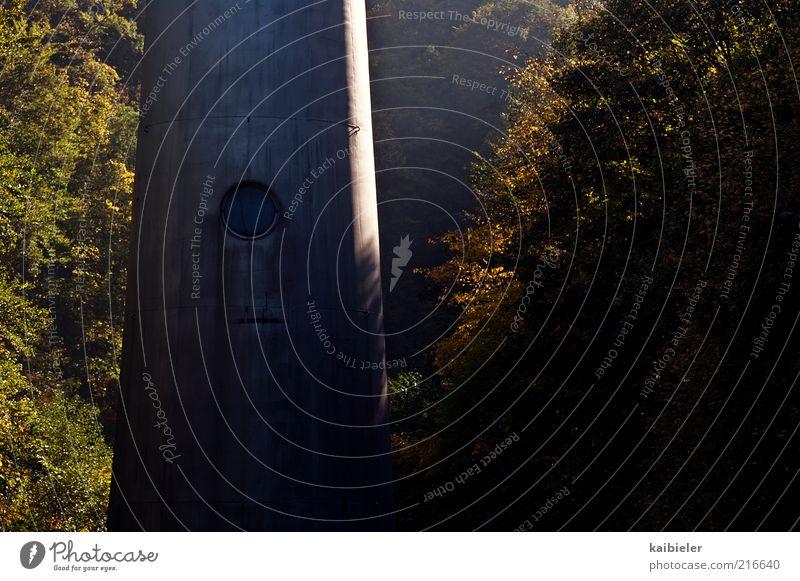 Hexenhaus Natur grün Baum Pflanze Wald Umwelt dunkel Fenster Herbst braun Beton Turm geheimnisvoll Säule Bildausschnitt Anschnitt