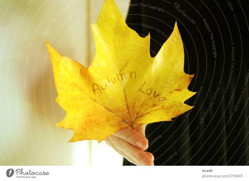Autumn Love Hand Finger Pflanze Blatt stehen Herbst Herbstlaub herbstlich Farbfoto Innenaufnahme Herbstfärbung Ahorn gelb Schriftzeichen Aussage Liebesbekundung