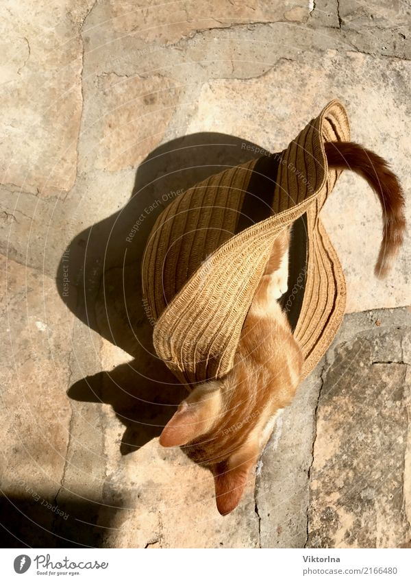 Katze im Hut Stil Mütze Tier Haustier Stein fangen Jagd Blick niedlich wild weich Gefühle Neugier Farbfoto Vogelperspektive