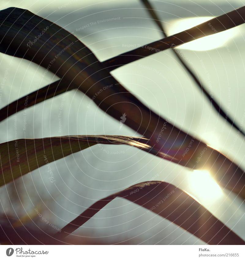 Die schönen Seiten des Herbst Natur Wasser grün Pflanze Blatt Umwelt Gras grau hell See glänzend Sträucher leuchten Schilfrohr Seeufer Schönes Wetter
