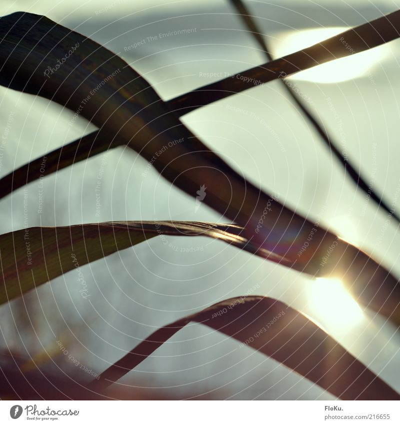 Die schönen Seiten des Herbst Umwelt Natur Pflanze Wasser Sonnenlicht Schönes Wetter Gras Sträucher Blatt Wildpflanze Seeufer leuchten glänzend hell grau grün