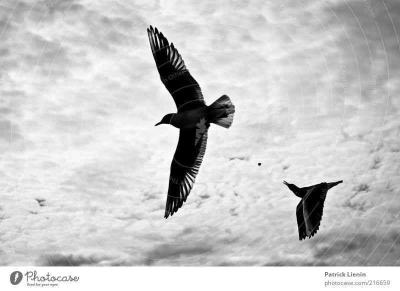 catch without arms Umwelt Natur Landschaft Tier Urelemente Luft Himmel Wolken Wetter Schönes Wetter Wind Küste Flussufer Wildtier Vogel Flügel 2 fliegen