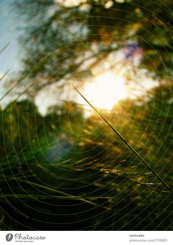 secret garden Natur Gras schön gelb grün ästhetisch ruhig Frieden Unschärfe Detailaufnahme Farbfoto Außenaufnahme Dämmerung Licht Sonnenlicht Sonnenstrahlen
