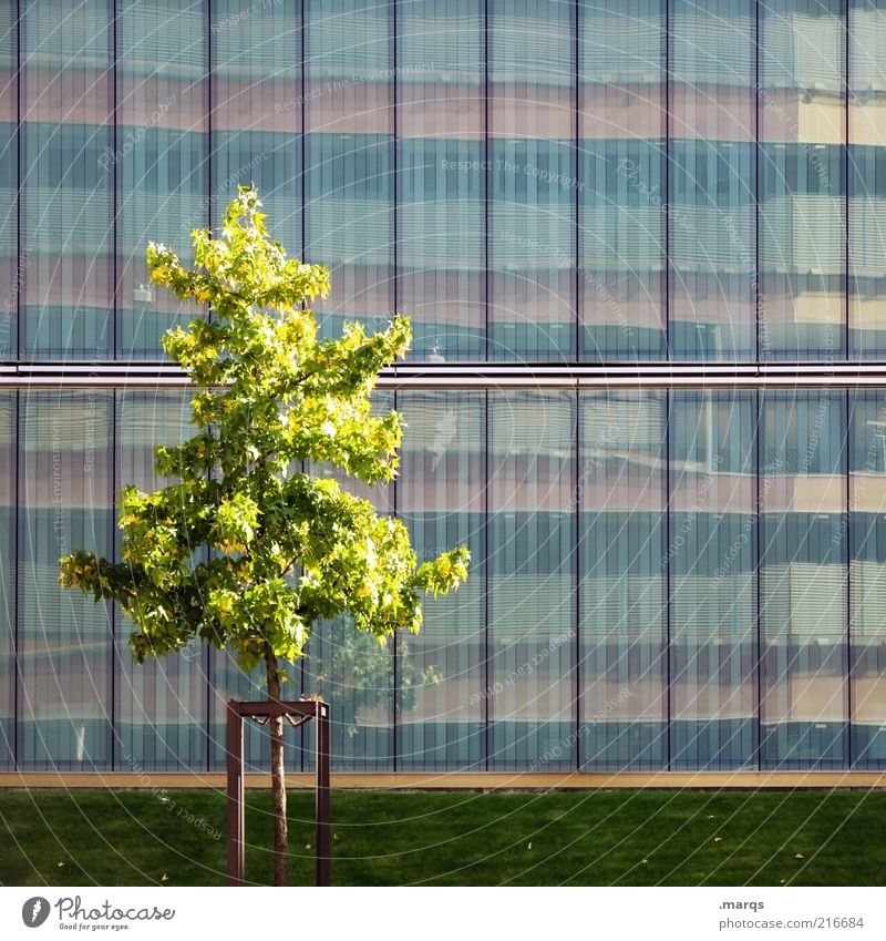 In Front of Natur schön Stadt Baum Sommer Gefühle Fassade Wachstum einzeln Gegenteil Verschiedenheit Spiegelbild Glasfassade