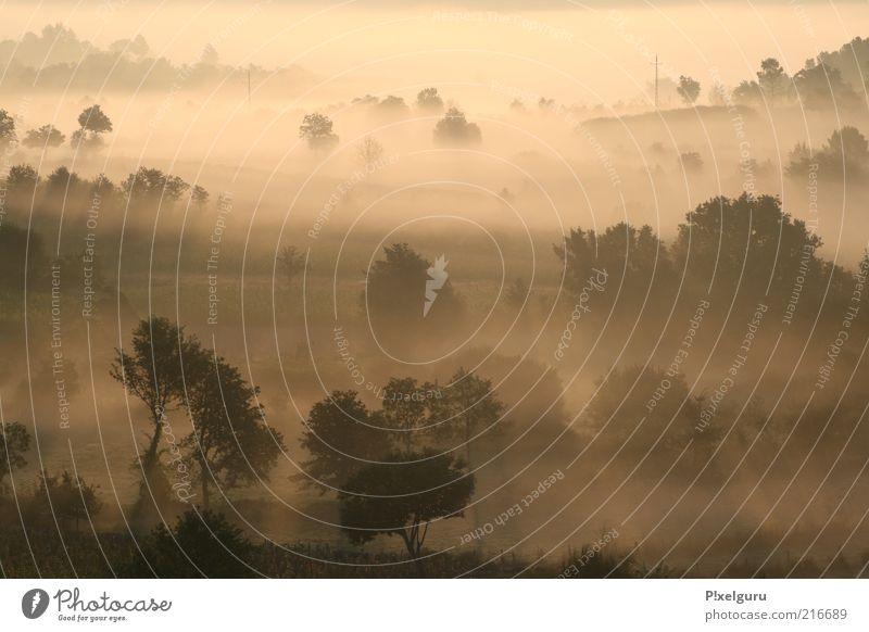 Sonnenflut Baum Sommer Landschaft Hintergrundbild geheimnisvoll Hügel Portugal unheimlich Dunst unklar Kontrast Nationalpark Gegenlicht Morgen unberührt Morgennebel