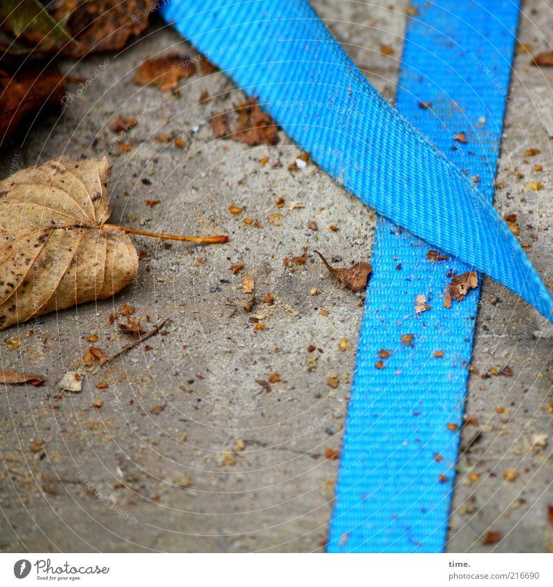 [HH10.1] - Herbstkrümel blau Blatt Beton liegen beweglich vertrocknet Textilien Anschnitt Bildausschnitt abgelegen getrocknet Herbstlaub Befestigung Krümel