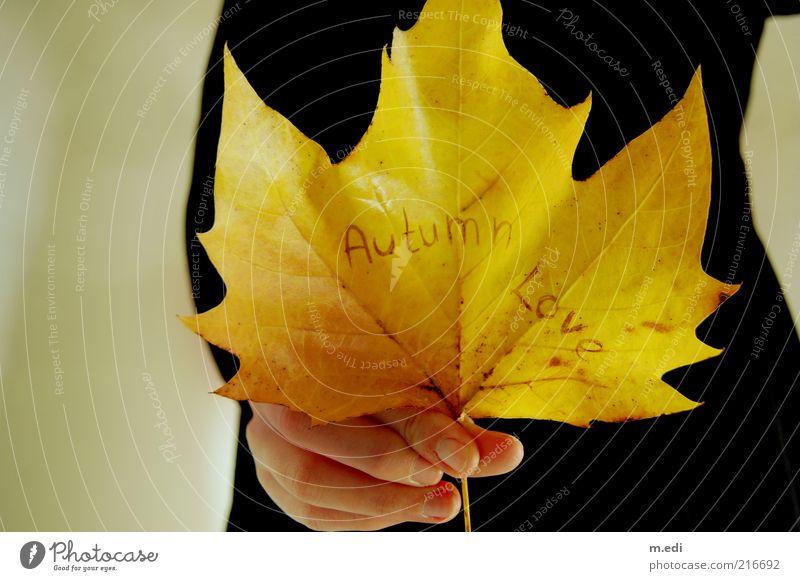 Autumn Love II Hand Herbst Blatt Kleid alt Herbstlaub Ahornblatt Farbfoto Innenaufnahme Naturliebe Liebeserklärung Liebesbekundung Schriftzeichen Englisch